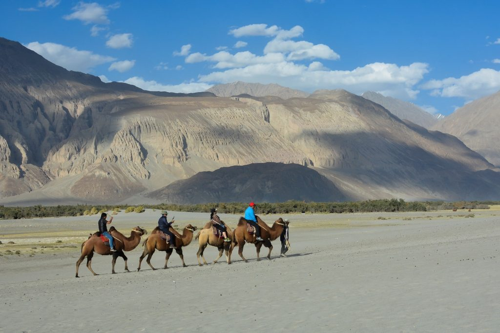 tourists enjoying a double hunched camel ride in Nubra valley of Ladakh